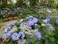 DISPLAY 1 - Hydrangea / Fuchsia  (1 of 7)