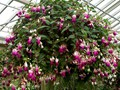 DISPLAY 1 - Hydrangea / Fuchsia  (4 of 7)