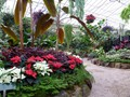 DISPLAY 3 - Tropical / Poinsettia  (6 of 7)