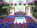 DISPLAY 4 - Cineraria / Cyclamen  (1 of 7)